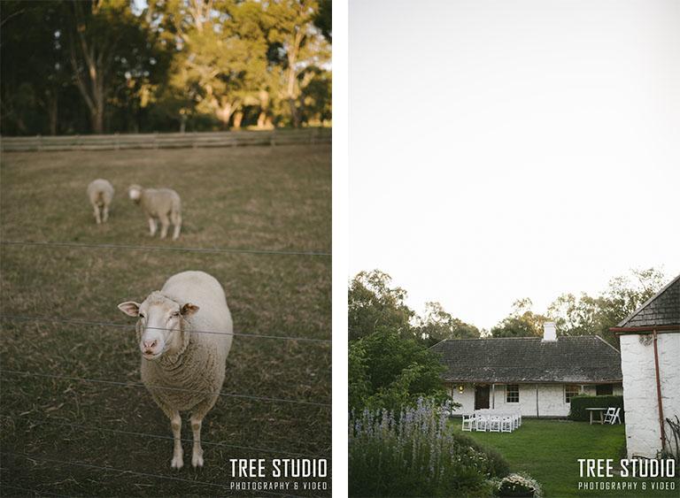 Emu Bottom Homestead Wedding Photography RT 103 - Ruby & Tyson's Wedding Photography @ Emu Bottom Homestead